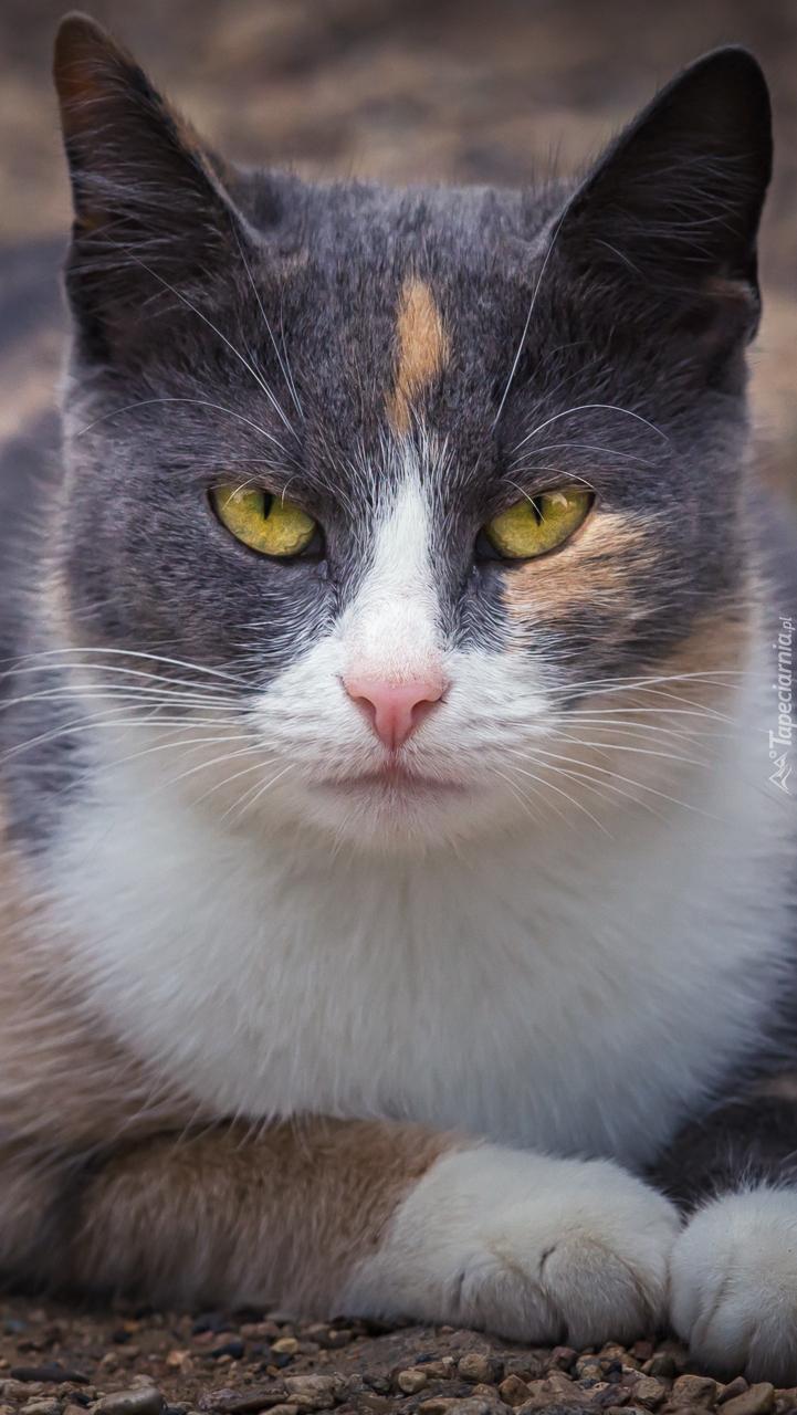 Kot o żółtych oczach