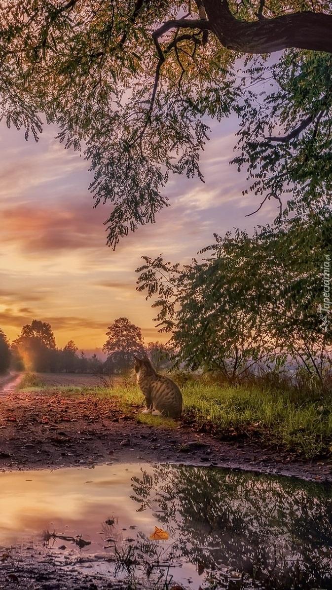 Kot obok kałuży pod drzewem