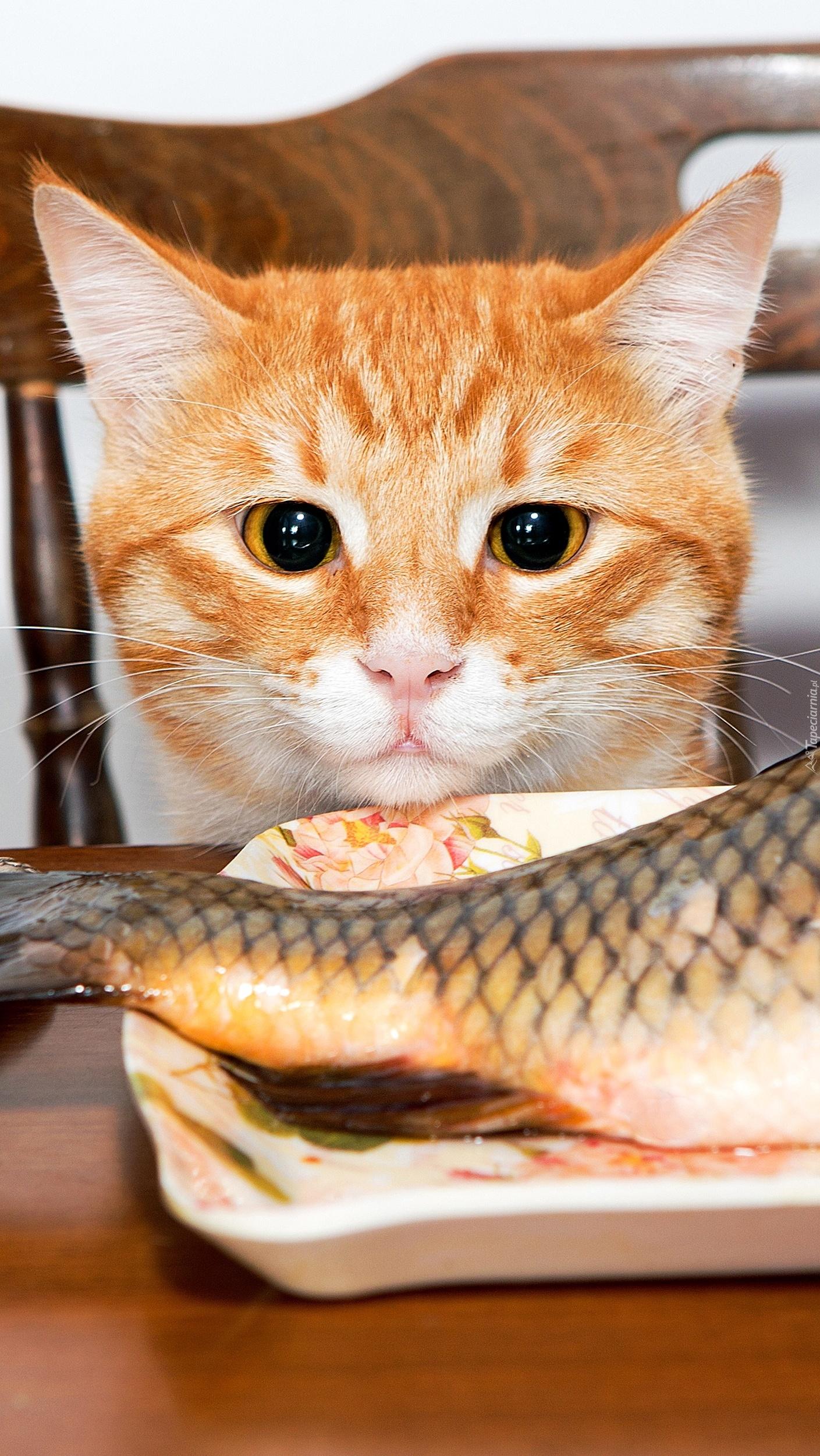 Kot patrzący na rybę