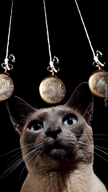 Kot patrzący na wahadełko