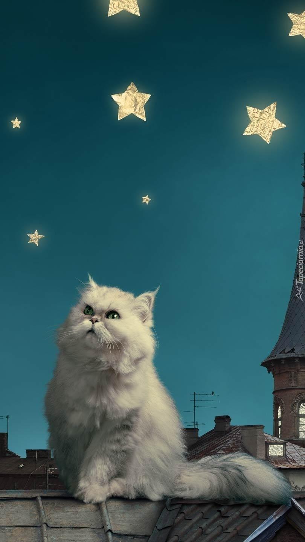 Kot perski na dachu w jasną noc