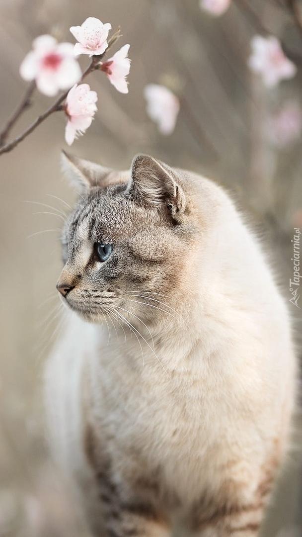 Kot przy okwieconej gałązce