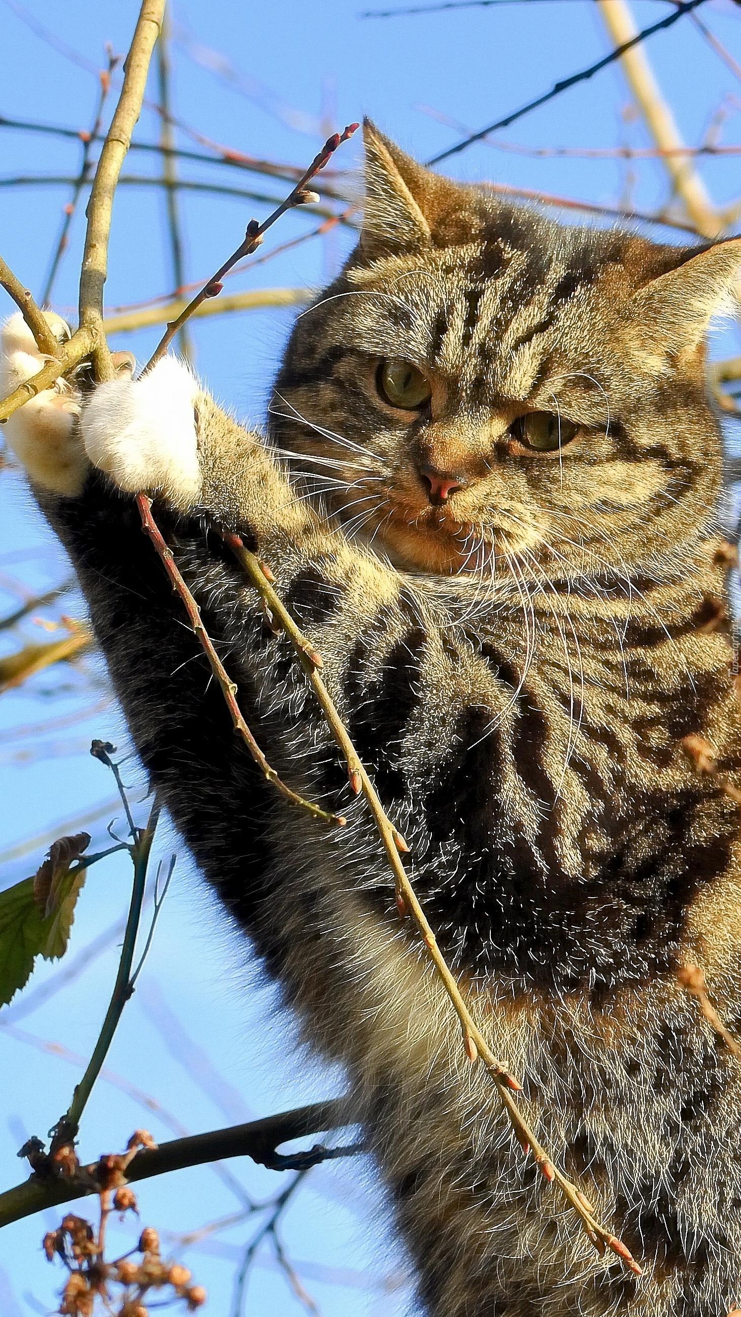 Kot uczepiony gałązek