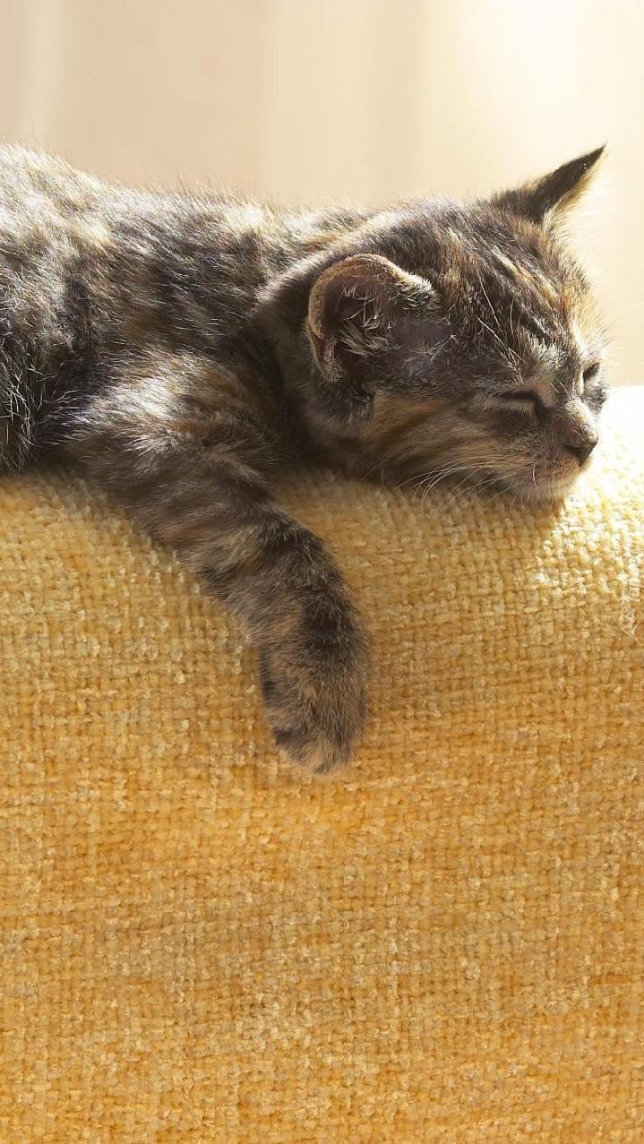 Kot usnął na kanapie