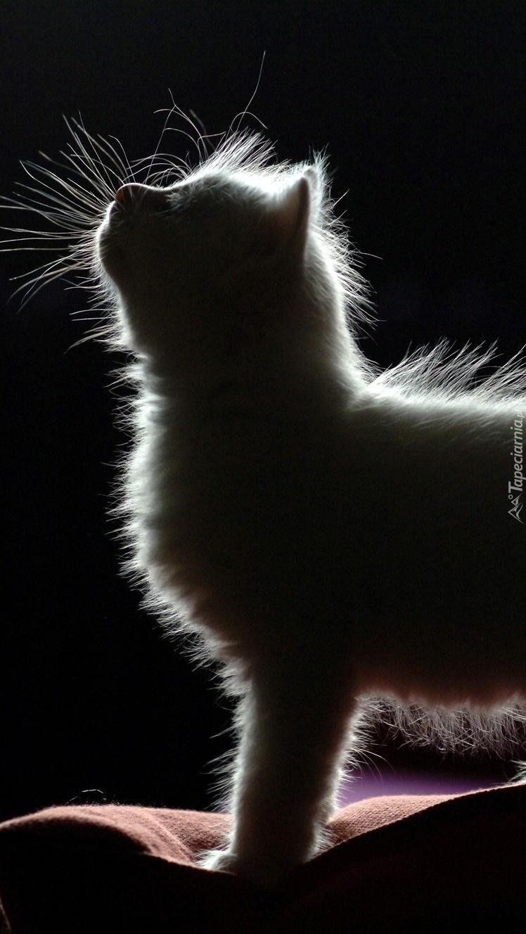 Kot w cieniu