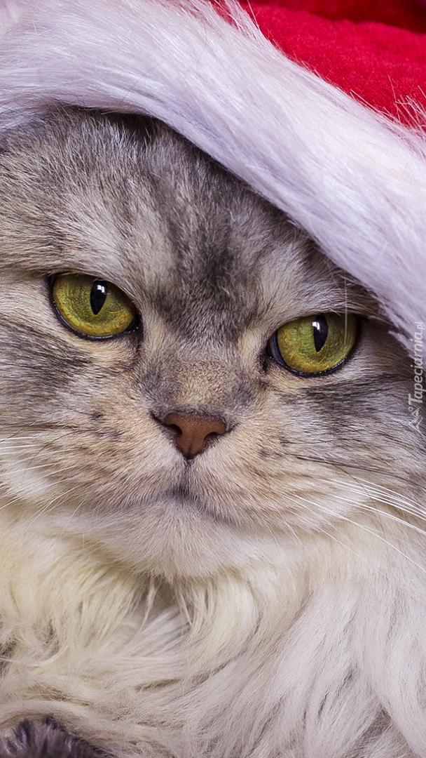Kot w czapce Mikołaja