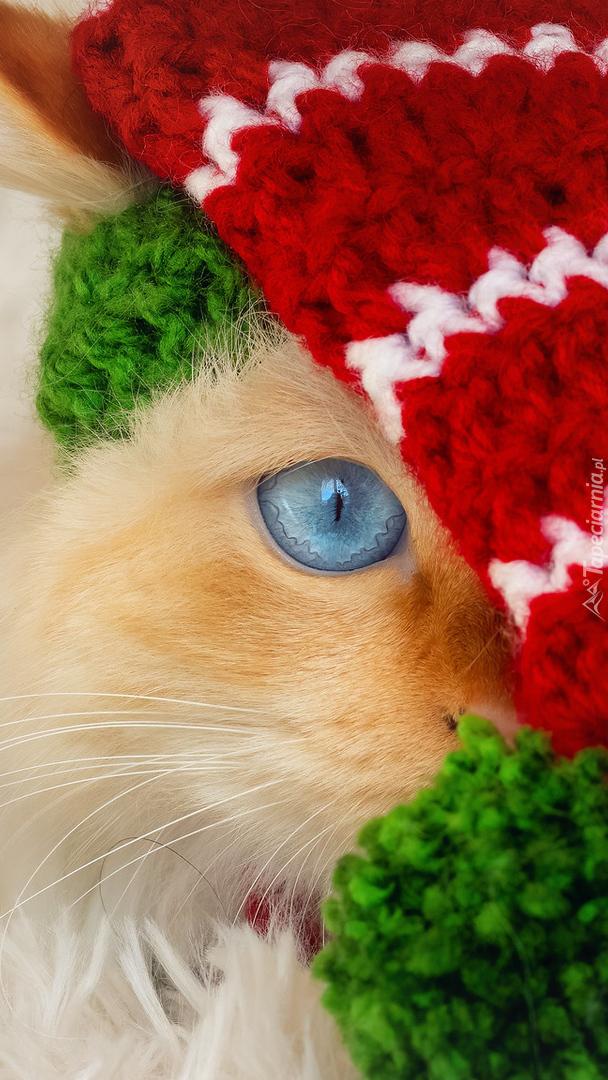 Kot w czapce z pomponem