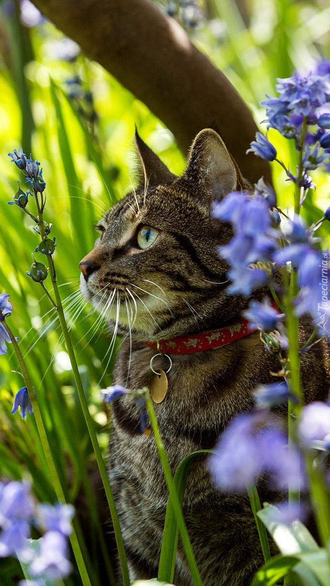 Kot w kwiatach cebulicy