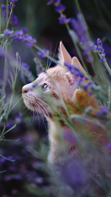 Kot w kwiatkach