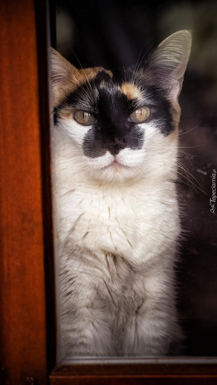 Kot w oknie