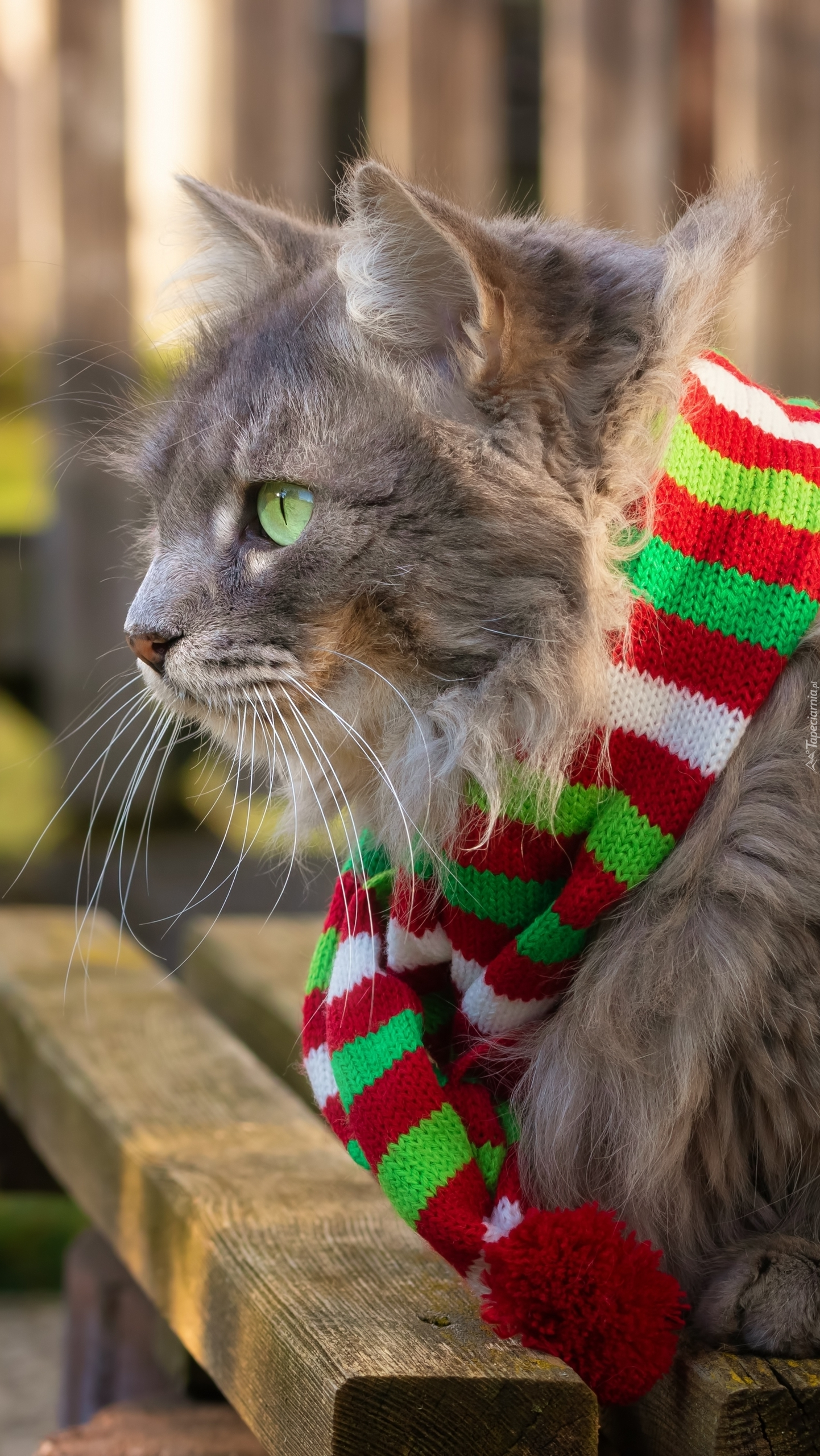 Kot w pasiastym szaliku