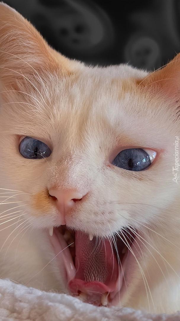 Kot z otwartym pyszczkiem