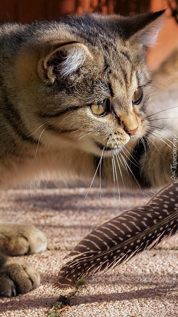Kot z piórkiem