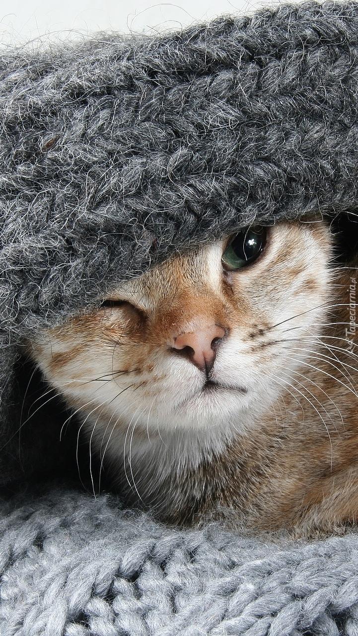 Kot z przykrytą głową