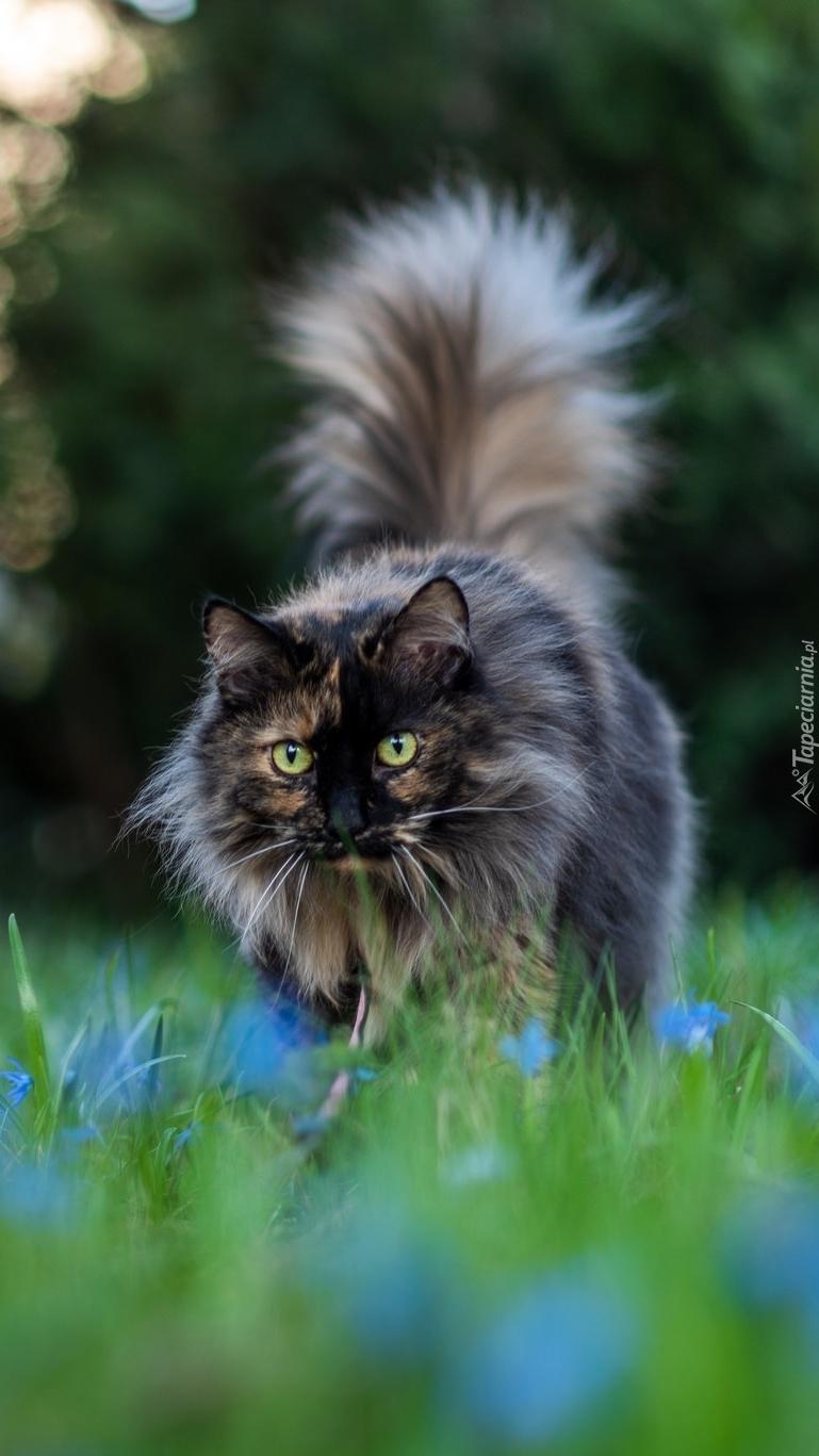 Kot z puszystym ogonem