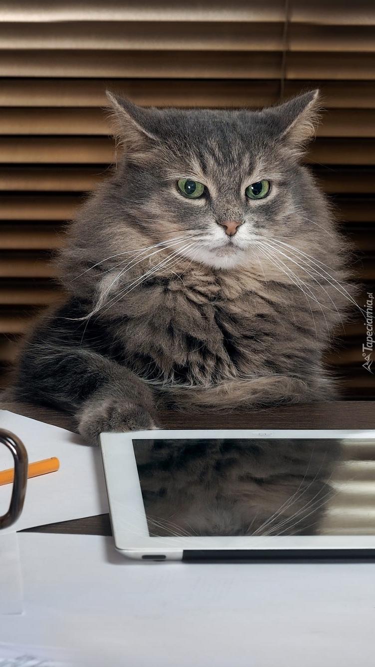 Kot z tabletem