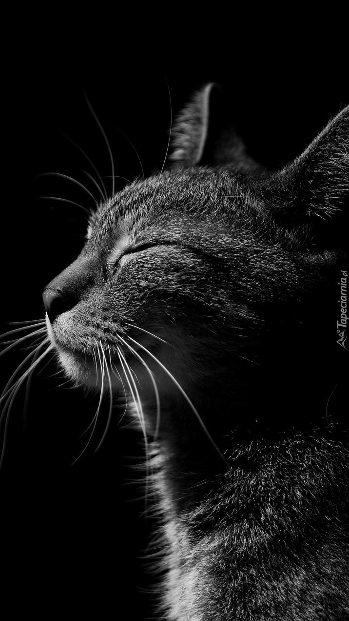 Kot z zamkniętymi oczami