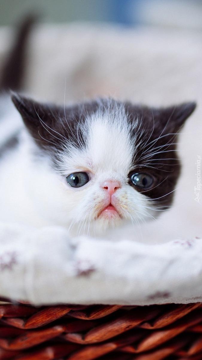 Koteczek w koszyku
