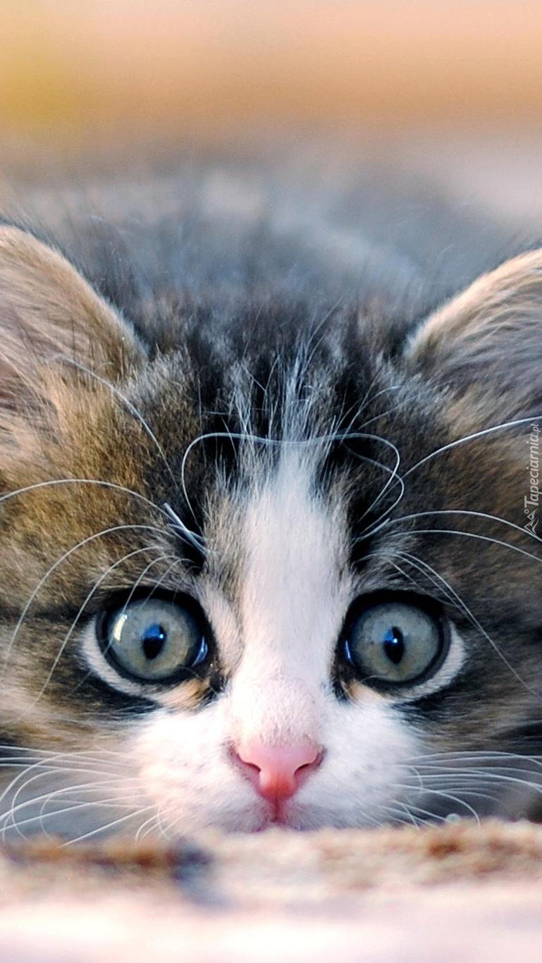 Kotek ładniejsza i młodsza  wersja kota