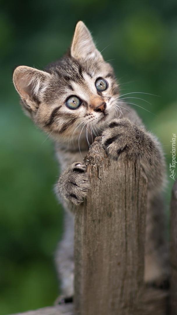 Kotek na płocie