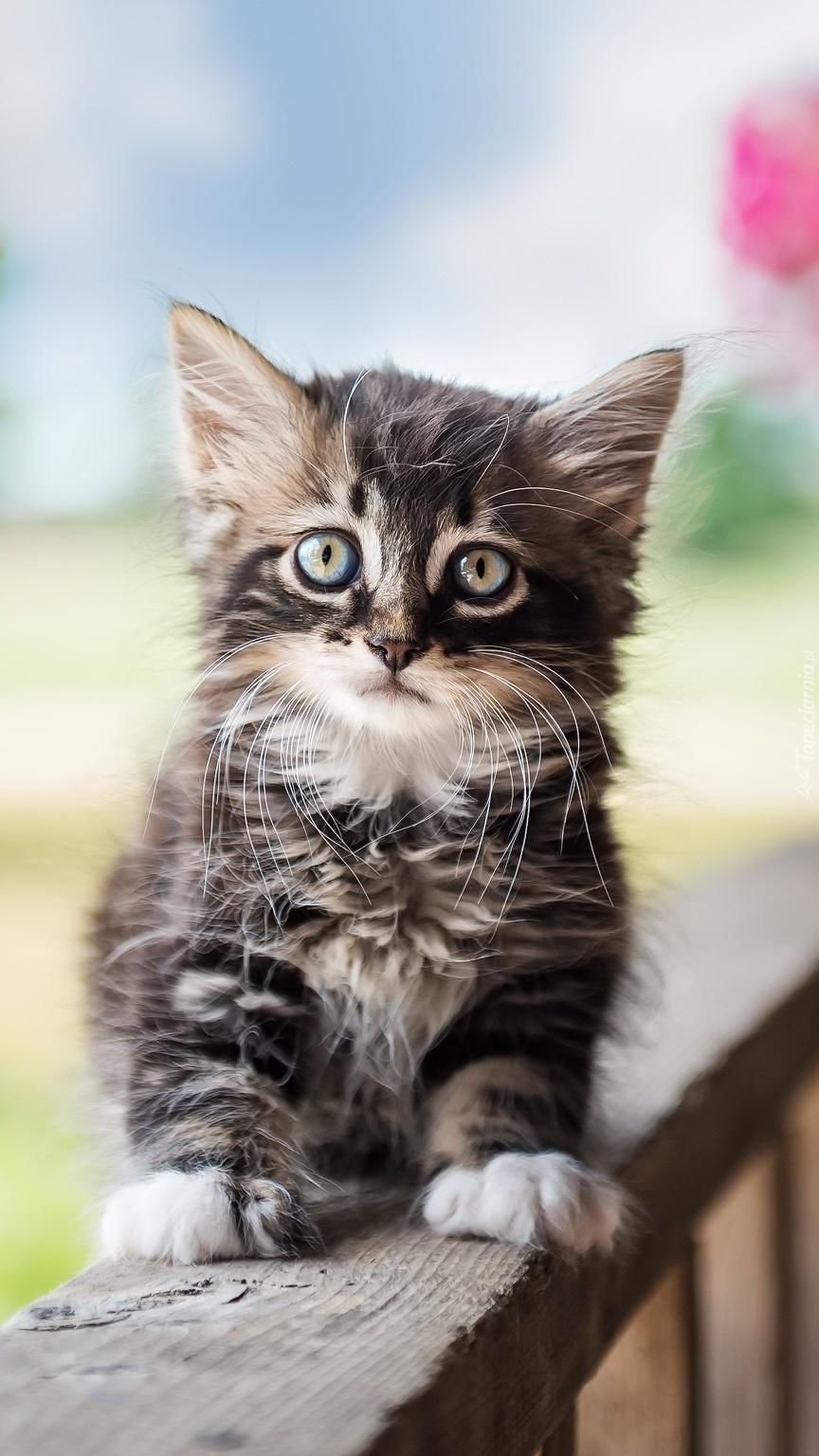Kotek na poręczy
