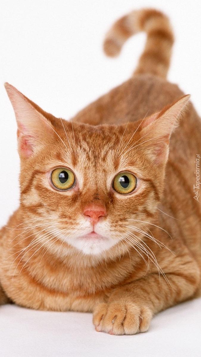 Kotek o bursztynowych oczach