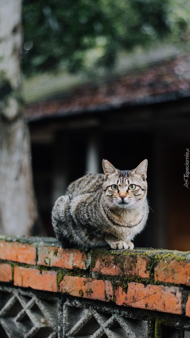 Kotek siedzący na murku