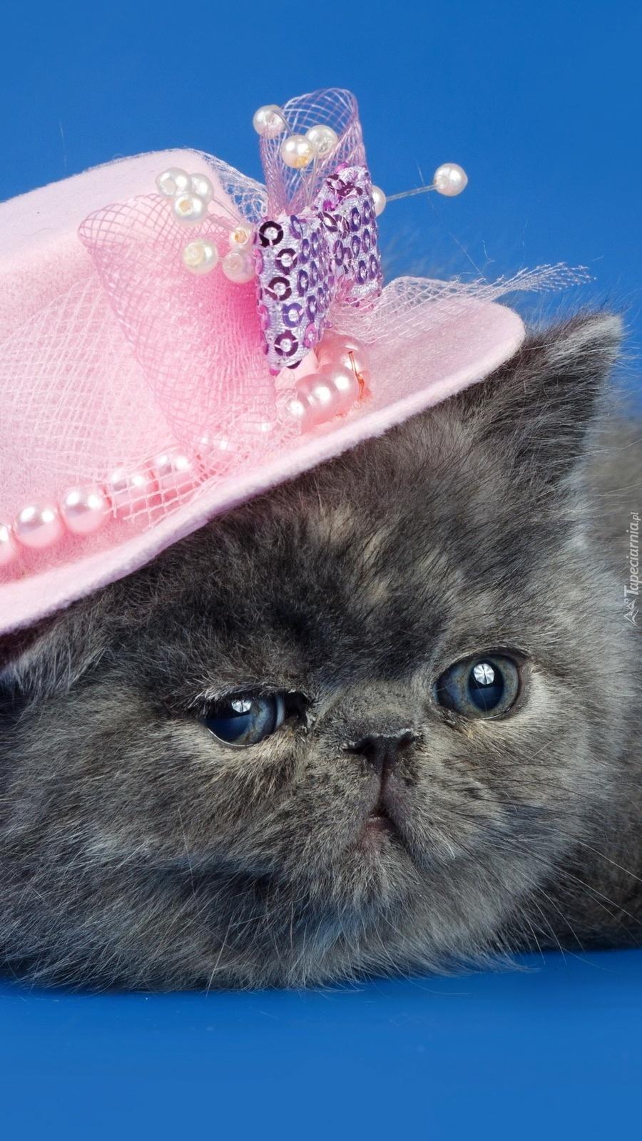 Kotek w kapelusiku