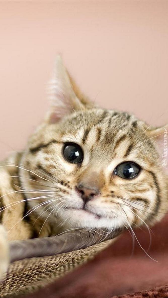 Kotek w koszyczku