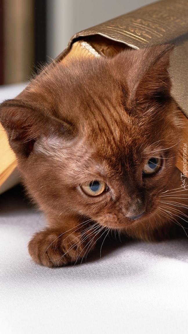 Kotek z książką na grzbiecie
