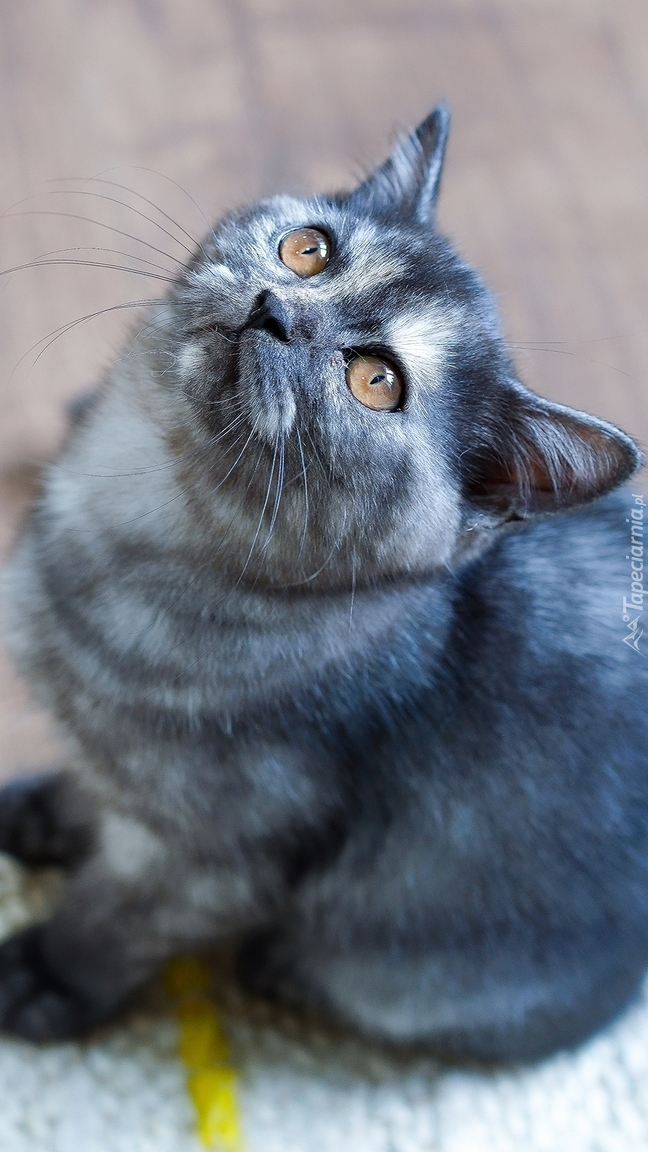 Kotek z uniesioną głową