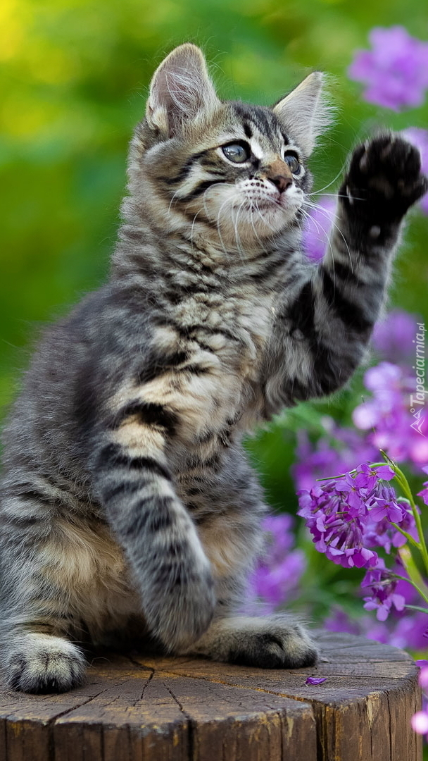 Kotek z uniesioną łapką