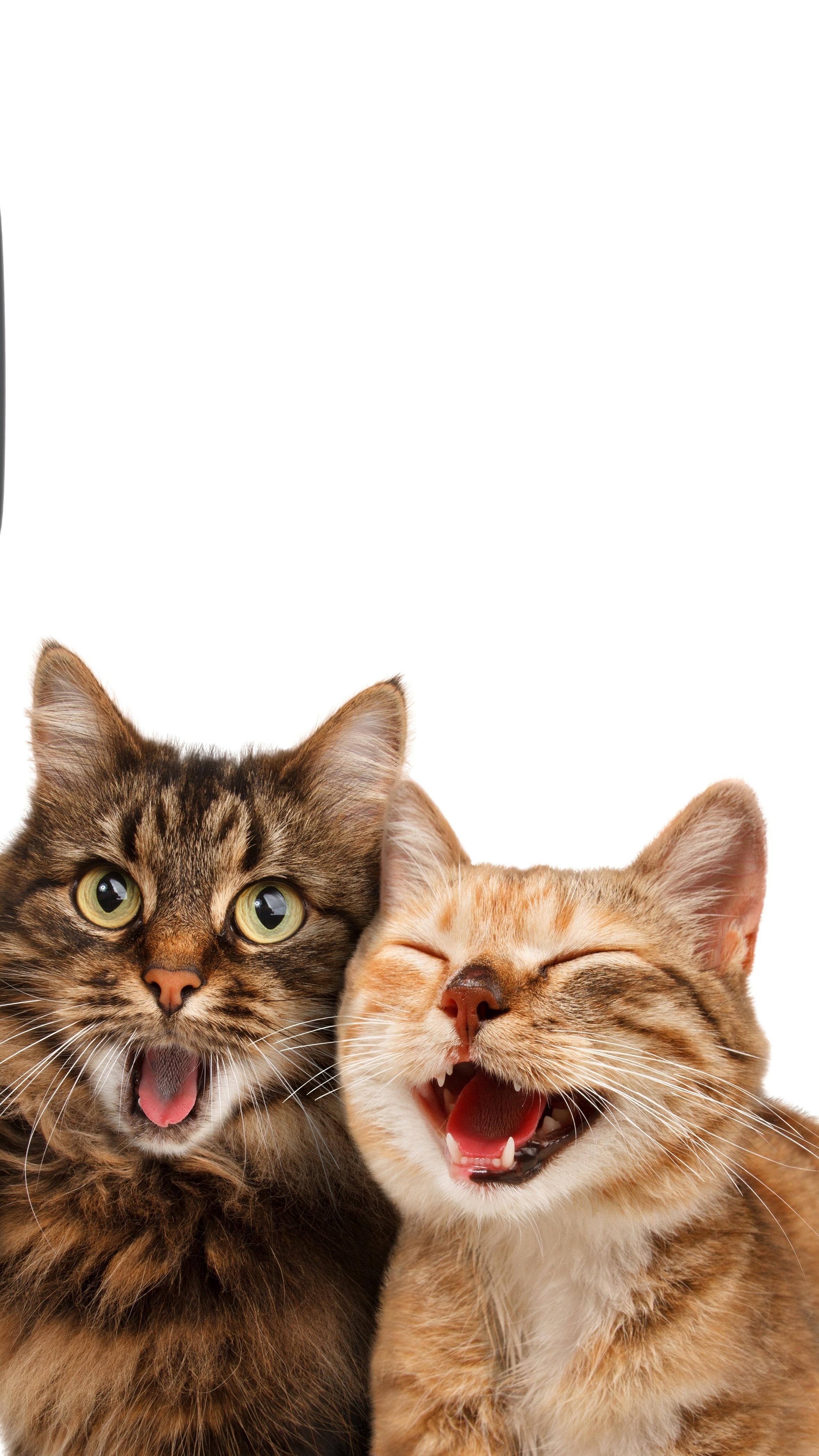 Koty By Się Uśmiały Tapeta Na Telefon