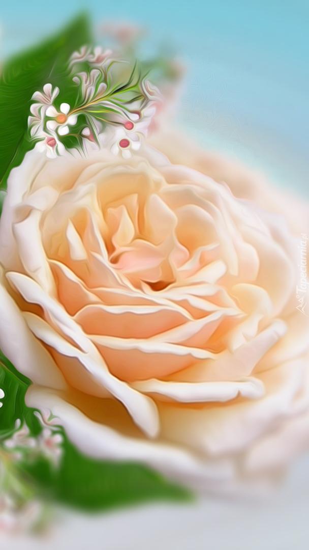 Kremowa róża