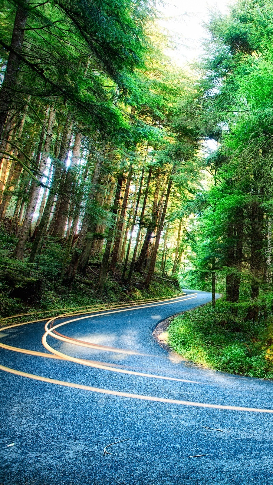 Kręta leśna droga