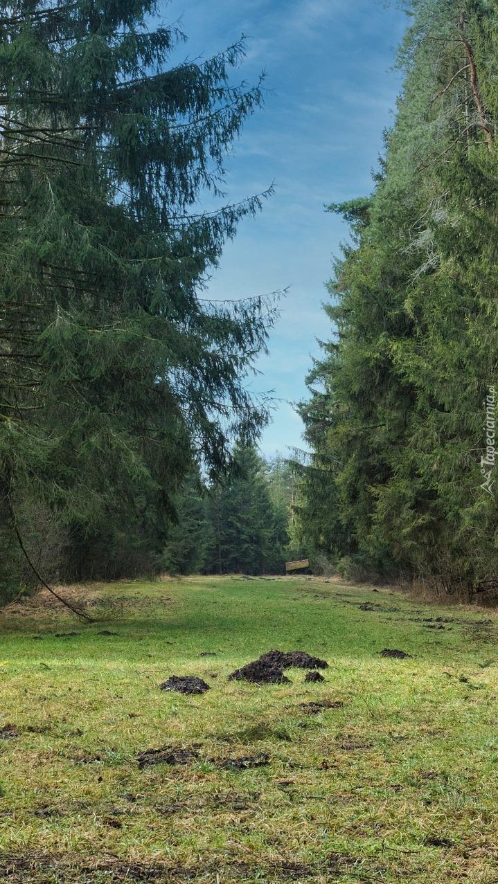 Kretowiska na polanie