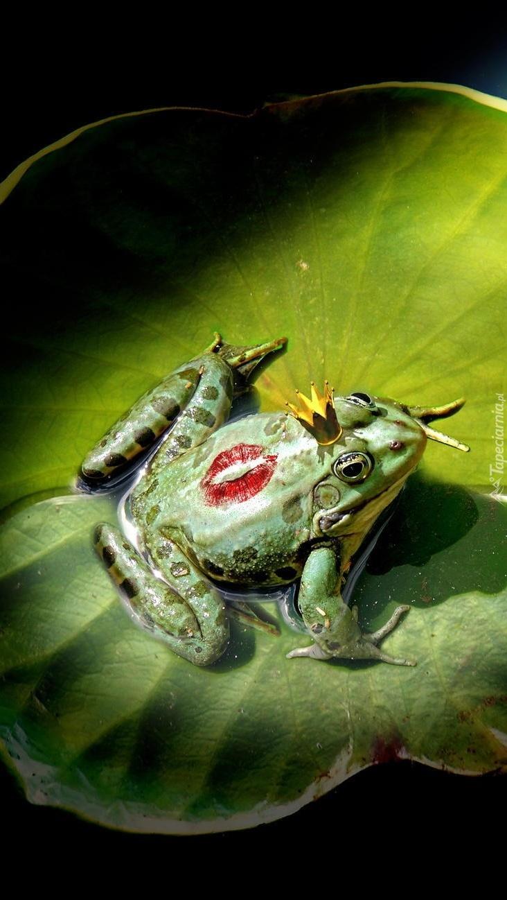 Królewicz żaba czeka na księżniczkę