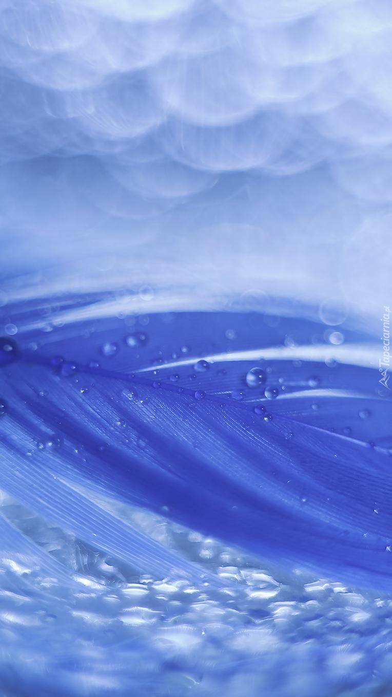 Kropelki wody na niebieskim piórku