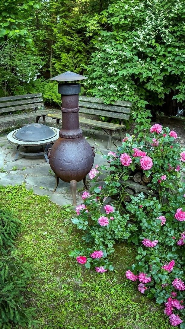Krzew róży i ławki obok grilla