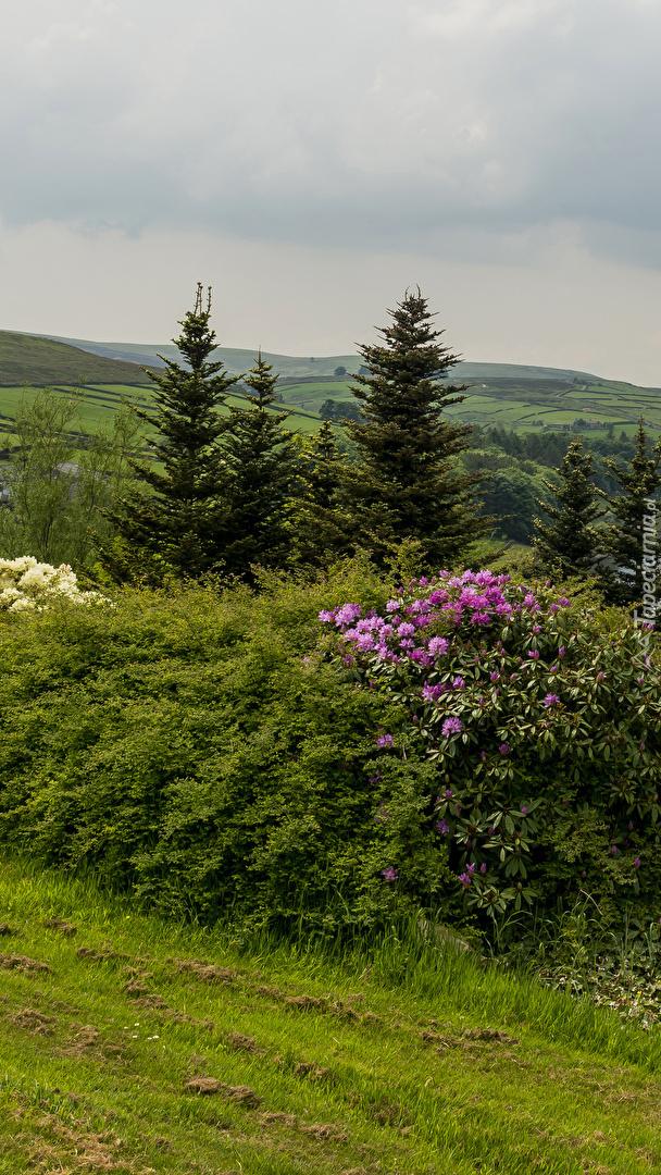 Krzewy na wzgórzach