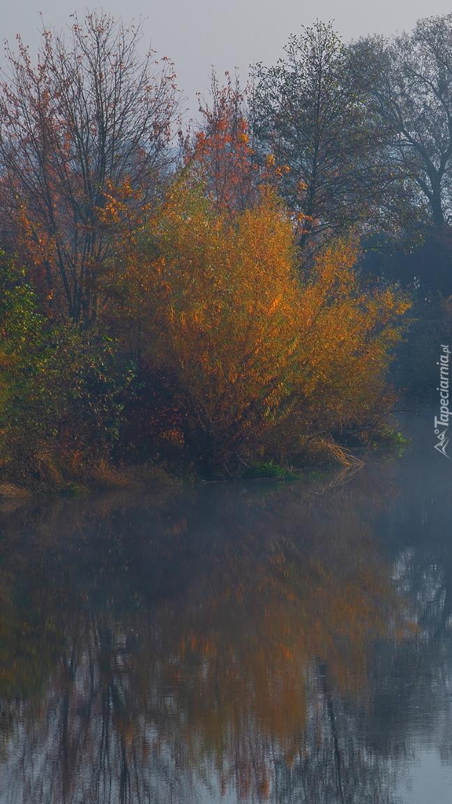 Krzewy nad rzeką
