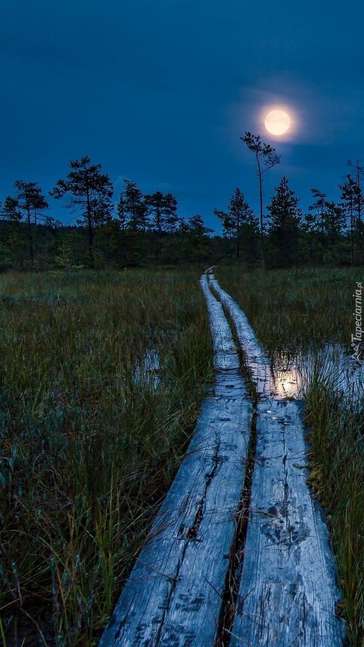 Księżycowa noc nad bagnami