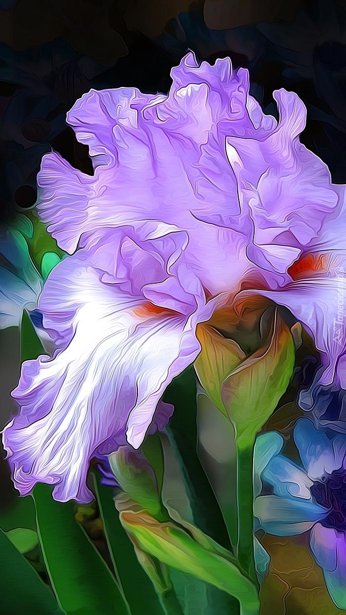 Kwiat irysa