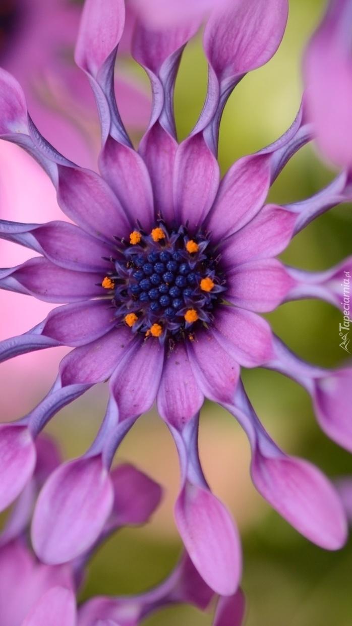 Kwiat jak wycinanka