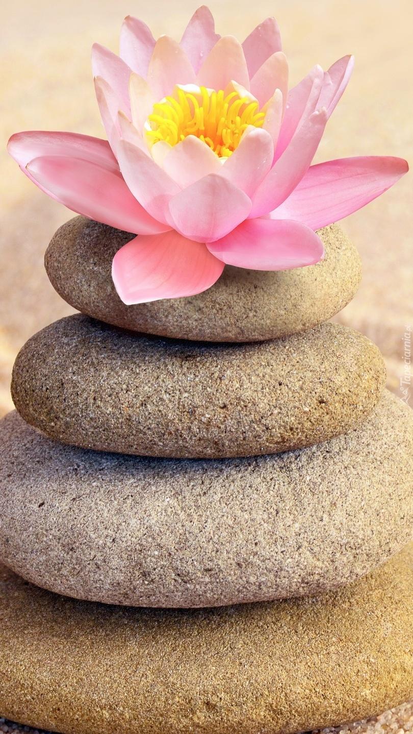 Kwiat lotosu na kamieniach