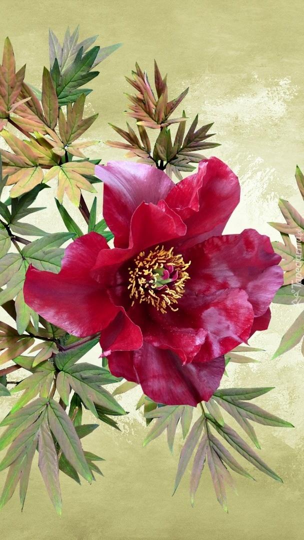 Kwiat piwonii w grafice