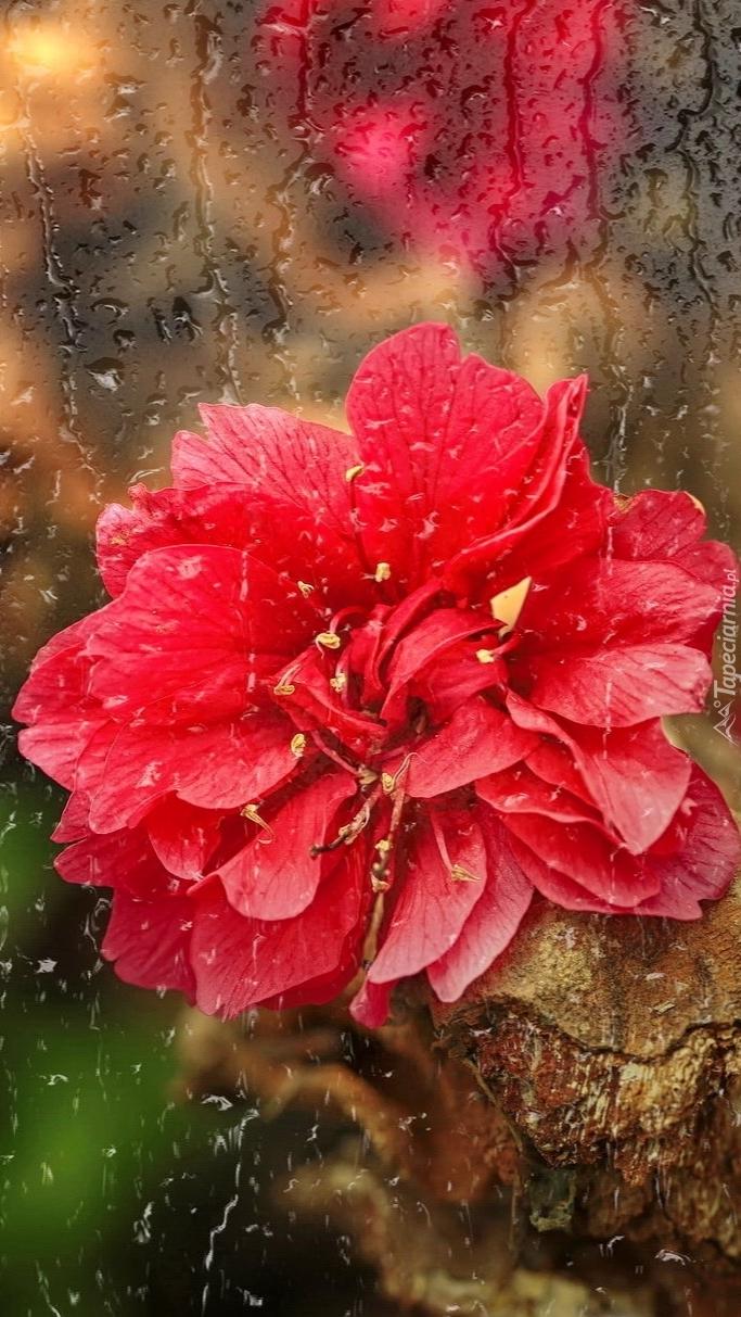 Kwiat w deszczu