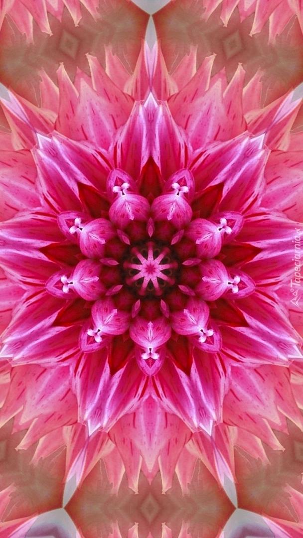 Kwiat w grafice