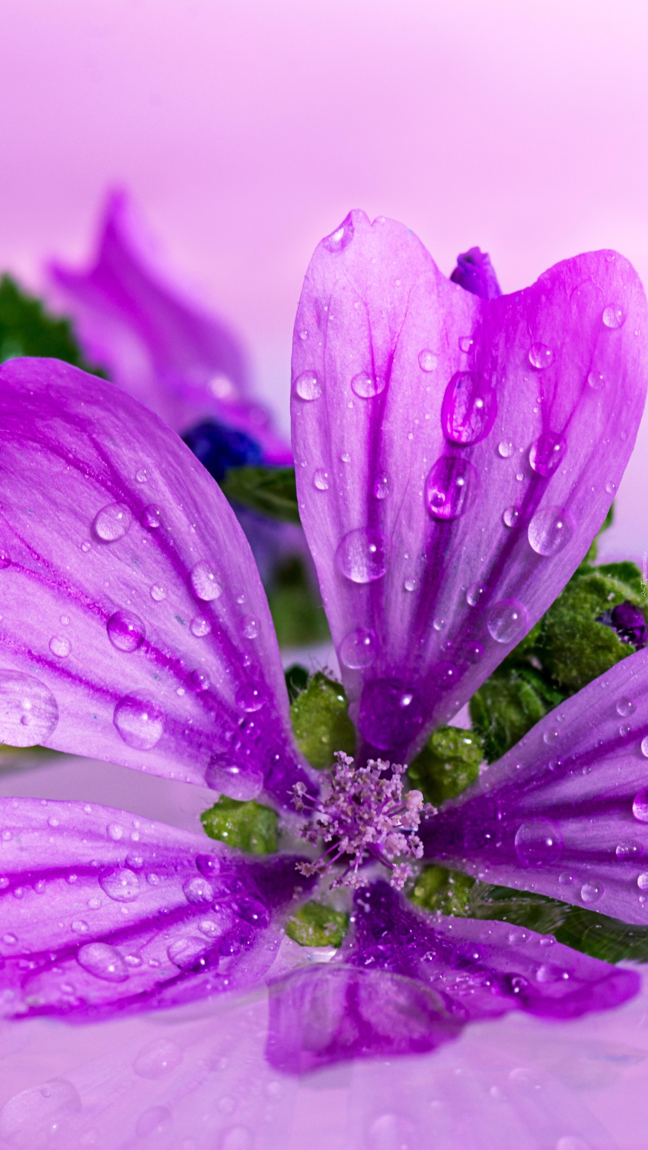 Kwiat w kroplach wody