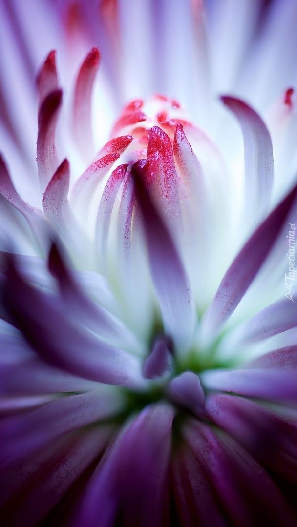 Kwiat w makro